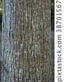 ต้นสนญี่ปุ่น,ต้นไม้,ธรรมชาติ 38701567