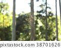 ใยแมงมุม,ป่าไม้,แมงมุม 38701626