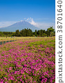 Shibazakura flower field and Mount fuji 38701640