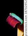 Caterpillar on flower petal. 38702652
