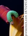 Caterpillar climbing on flower. 38702653
