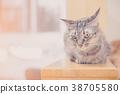 beautiful cute cat lying 38705580