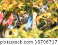 bird, birds, fowls 38706717