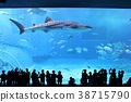 고래상어, 츄라우미 수족관, 수조 38715790