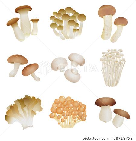 蘑菇 原料 食品 38718758
