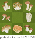 Various mushrooms _ moss green 38718759