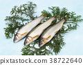 香魚 魚 淡水魚 38722640
