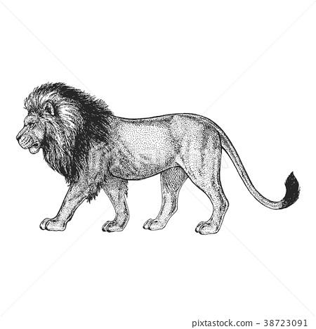 Zoo. African fauna. Lion, wild cat. Hand drawn 38723091