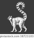 Zoo. African fauna. Lemur, madagascar. Hand drawn 38723103