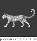 Zoo. African fauna. Puma, leopard, wild cat 38723139