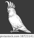 鳥兒 鳥 向量 38723141
