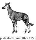 Zoo. African fauna. Okapi. Hand drawn illustration 38723153