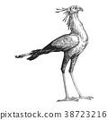 鳥兒 鳥 向量 38723216