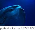 翻车鱼 水生的 水下 38723322