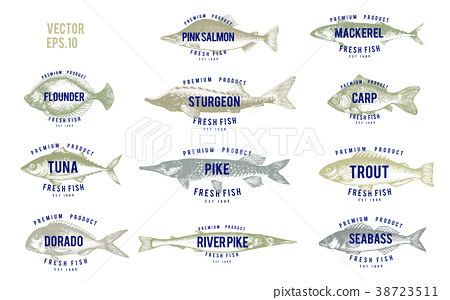 Hand drawn illustrations of fish with names in 38723511