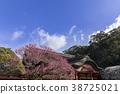 ume, shrine, flowers 38725021