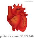 Human Heart Isolate, Illustration. 38727346