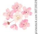 樱花 樱桃树 春天 38728329