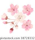 樱花 樱桃树 春天 38728332
