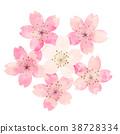 樱花 樱桃树 春天 38728334
