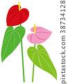 foliage, plant, leaf 38734128
