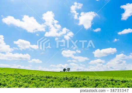 [北海道]仲夏美瑛藍天白雲 38735347
