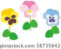 花朵 花卉 花 38735642