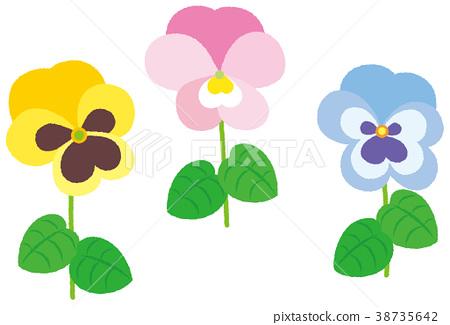 花三色蝴蝶花黃色粉紅色藍色 38735642