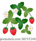 flower, flowers, strawberries 38737249
