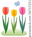 봄, 튤립, 꽃 38737251