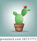 Cactus ,Illustration flat design 38737771