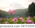 蓮花 蓮 花朵 38743099