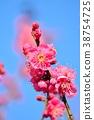매화의 꽃과 푸른 하늘 (N) 38754725