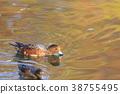 鳥兒 鳥 水雞 38755495