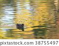 鳥兒 鳥 水雞 38755497