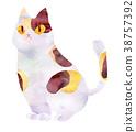 고양이, 애완동물, 펫 38757392