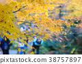 楓樹 紅楓 楓葉 38757897