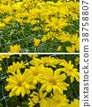 Abstract background of yellow flowers 38758807