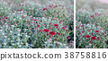 Abstract background of red flowers 38758816