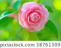 花朵 花 花卉 38761309