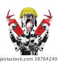dog firefighter screams signal  38764240
