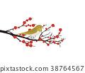 ume, japanese bush warbler, flower 38764567