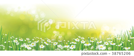 Vector nature  background, daisy  flowers field. 38765206