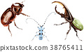 Exotic beetles wild insect in a watercolor style 38765411