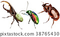 Exotic beetles wild insect in a watercolor style 38765430