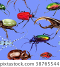 Exotic beetles wild insect pattern in a watercolor 38765544
