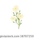 chamomile, natural, remedy 38767250