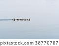 Mallards swimming in a row 38770787