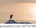Heron waiting for springtime 38770788