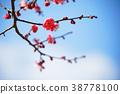 春天 春 花朵 38778100